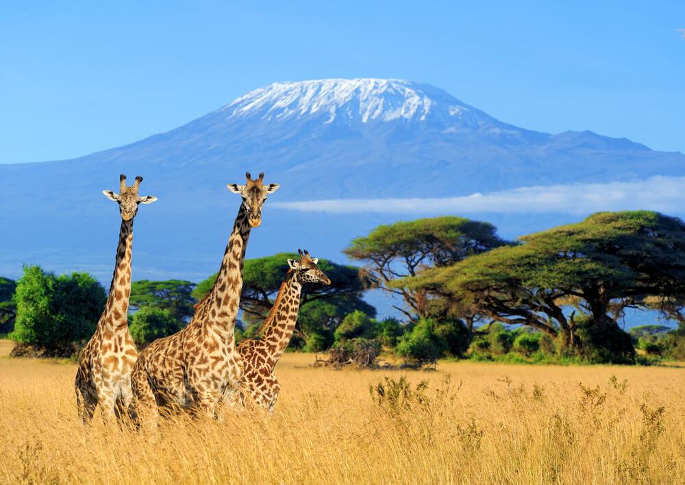 Partir au Kenya